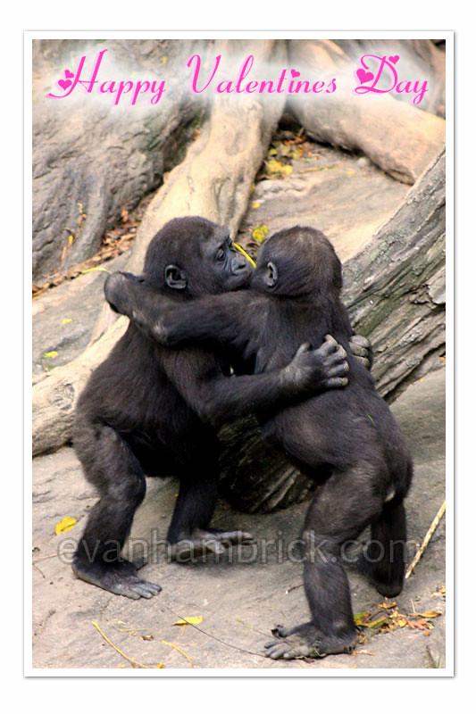 Valentines Day Card - Gorilla Hug!