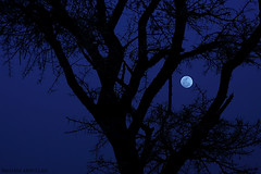 ( ibrahim) Tags: moon night canon image ibrahim   50d   canon50d    altmimi