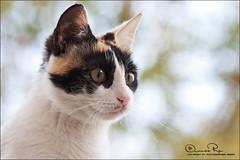 حبيبة قلبي ^^ (Abeer Hussein) Tags: macro cat canon sigma apo dg 70300 450d