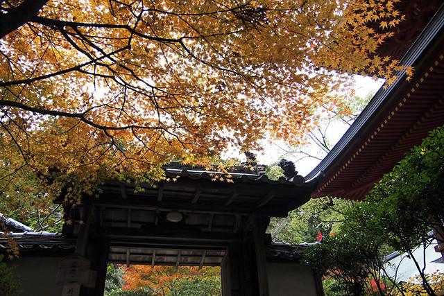 101115_145456_円成寺