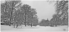 B&W Winter in Noorderplantsoen,Groningen stad,the Netherlands,Europe (Aheroy) Tags: park city trees winter bw panorama holland art netherlands dutch forest landscape fun town europe colours different arts nederland surreal hallucination groningen stad beautifull noorderplantsoen zw tonemapped singlerawhdr aheroy aheroyal beautifulgroningen