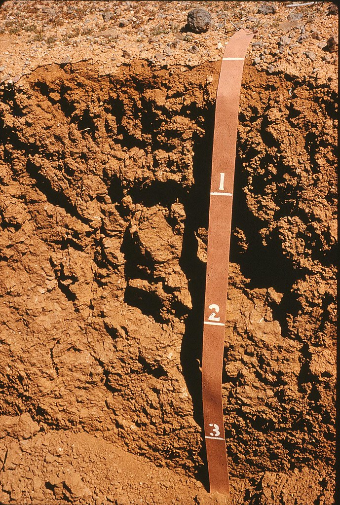 alkaline soil Before you try to make your soil more alkaline, test it to get an accurate ph reading amend by adding organic compost or limestone.