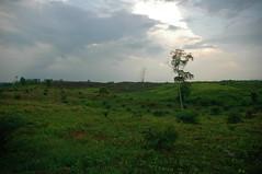 DSC_0881 (mitrataj) Tags: forest sumatra indonesia village violence conflict hutan deforestation riau hulu pulpwood rokan