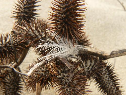 soft and spiky I