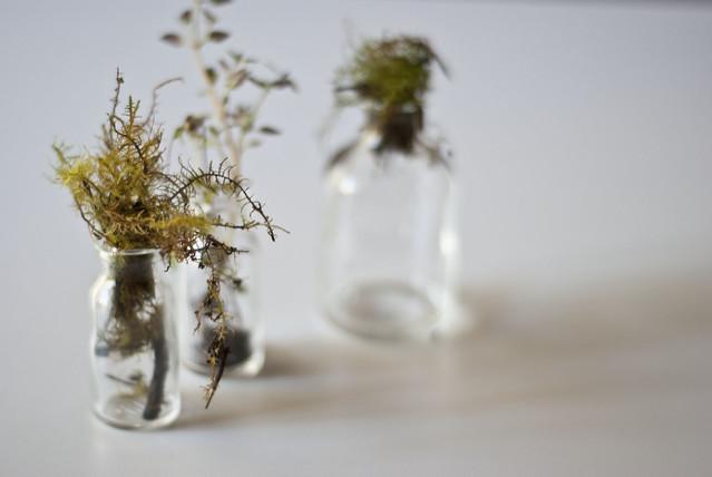 bottle plants