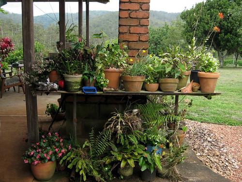 Mum's potted garden