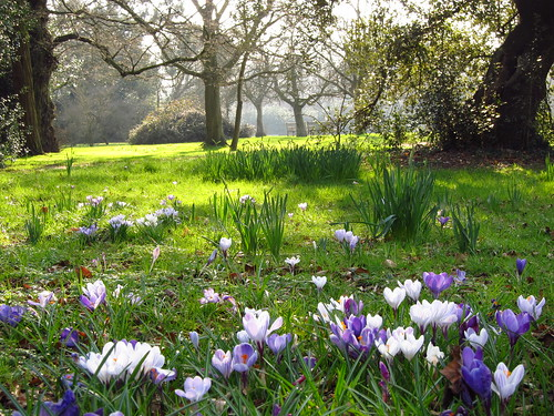 Crocus Meadow in Cannizaro Park