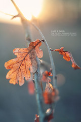 hot & cold (Youronas) Tags: autumn sunset orange sun nature leaves 30 canon germany bayern deutschland bavaria leaf sonnenuntergang dof cross bokeh dusk 14 herbst sigma franconia 7d processing franken sonne bltter abenddmmerung tiefenschrfe crossentwicklung