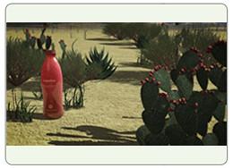 Nopalea Trivita SonoranBloom Wellness Challenge Sonoran Bloom Cactus Drink Review Testimonials pic7
