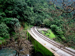 Crawling out of the woods (Jayfotographia) Tags: india tourism nature trekking goa trains karnataka trainspotting mandovi westernghats dudhsagar irfca dudhsagarwaterfalls doodhsagar braganzaghats jayasankarmadhavadas