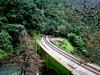 Crawling out of the woods (Jayfotographia) Tags: india tourism nature trekking goa trains karnataka trainspotting mandovi westernghats dudhsagar irfca dudhsagarwaterfalls doodhsagar braganzaghats jayasankarmadhavadas