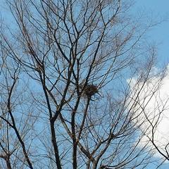 鳥の巣、またまた発見! nest.
