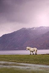 Joy (tigric (Ana Stefanovi)) Tags: horse white lake animal scotland lochness hourse