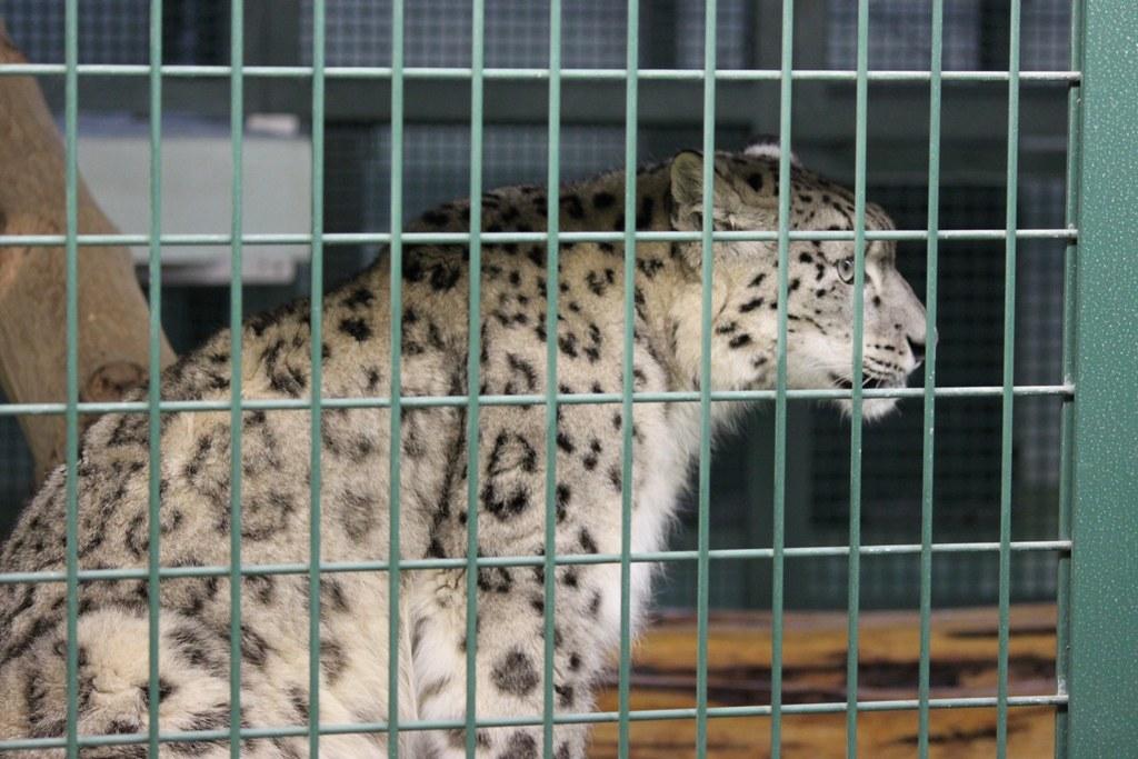 Sapporo Maruyama Zoo (14)