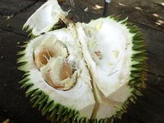 Zanzibar Durian