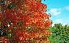 Fall colors (Rafakoy) Tags: blue red sky orange cloud ny newyork color colour tree green fall film colors leaves clouds 35mm landscape 50mm leaf colours poughkeepsie highland negative epson hudsonriver n80 nikonn80 tress huntercollege c41 kodakportra400nc afnikkor50mmf18d nikkoraf50mmf18d epsonv600 epsonperfectionv600 aldoraltamirano