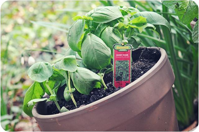 planting10