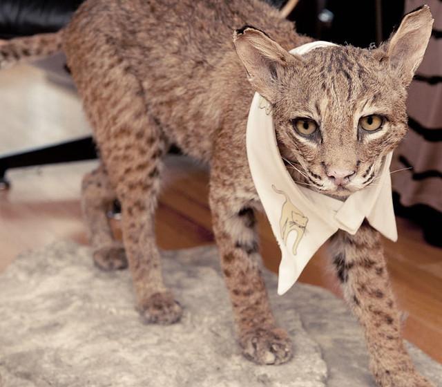 miu-meow