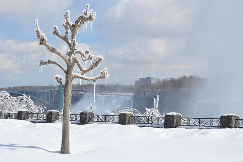 Ice-Misted Tree at Niagara Falls