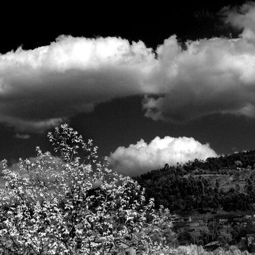 Monte de S. Pedro Fins (Joaquim Hierro)