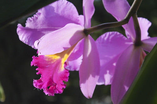 espiando a la orquidea