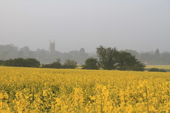 (Adam McKenzie) Tags: yellow fog landscape earlymorning rapeseed