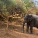 Safari Yala Nationalpark Sri Lanka