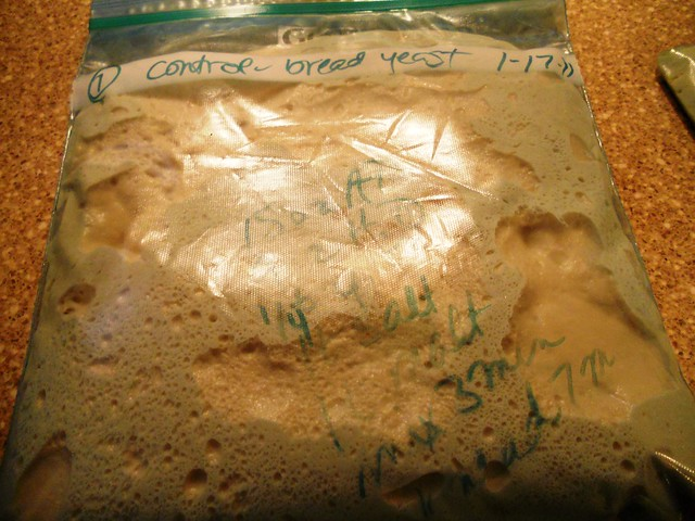 dough after overnight refrigeration