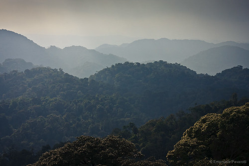 Forest of Nyungwe