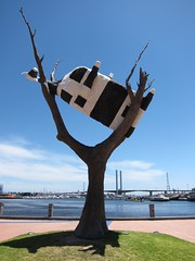 The cow climbed the tree (Brazilian Traveller) Tags: australia melbourne oceania