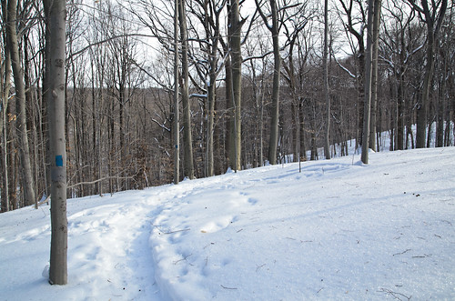Elmdale Trail, Winter [2/3]
