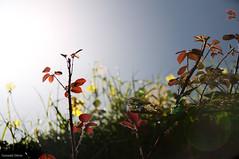 Gaia: la diosa Tierra (- GD photography -) Tags: sun sol nikon plantas earth lugares gaia camaras diosa tierra planeta 2011 d90 municipios teoría firgas valsendero