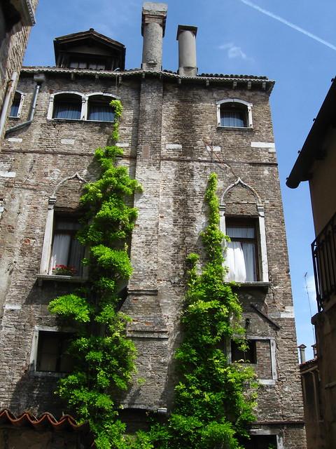 壁に伝う植物のフリー写真素材