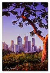 Tucked Away ([ Kane ]) Tags: city light tree green grass landscape photo glow cityscape purple image australia brisbane qld queensland kane floods brisbanecity kangaroopoint 2011 gledhill canon2470 kanegledhill wwwkanegledhillcom