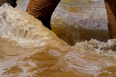 elephant foot splash close (Christine Lamberth) Tags: africa camera travel abstract game nature water canon photographer wildlife reserve location christine botswana wading mudpool mashatu lamberth elephantidaeelephant c4imges