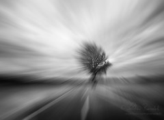 aperture (Ąиđч) Tags: abstract blur tree andy landscape movement andrea andrew movimento astratto albero paesaggio sfocato benedetti ąиđч