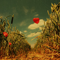 ~ summer love ~ (~ Pixel Passion ~) Tags: red summer sky brown sun hot green love nature field yellow clouds corn warm angle heart natural wind path ballon perspective windy sunny heat breeze pathway