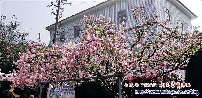 12 廣場旁吉野櫻