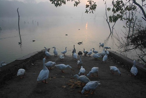 Photo Essay – Hauz Khas Lake, Near Green Park