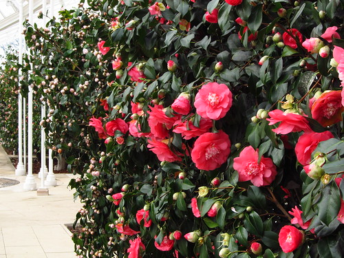 Camellia Conservatory