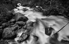 It's all downhill from here (Aaron Eakin) Tags: bridge bw water creek river washington stream downhill wallacefalls goldbar