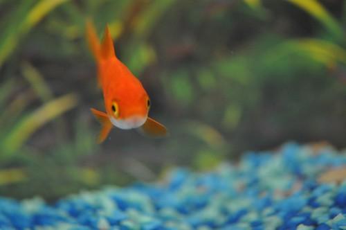 Fish - flora