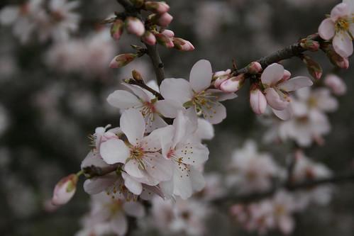 original, en flor
