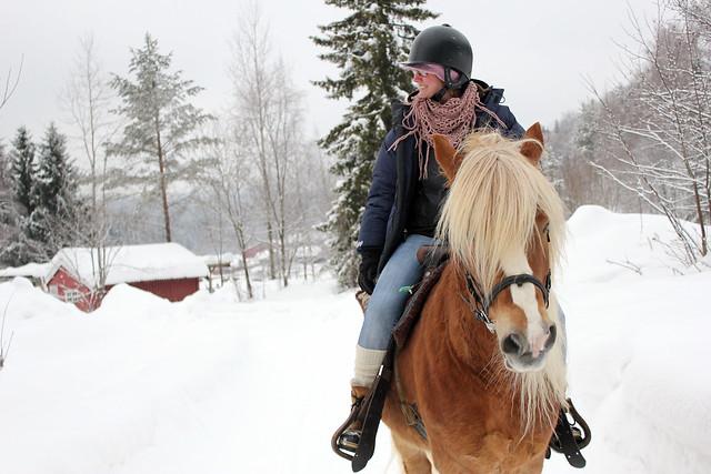 Ridning og hest