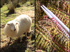 Woolly diptych for 52 in Twenty Eleven by Helen in Wales