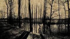 foret (laboratoire de l'hydre) Tags: texture nature silhouette unique ombre foret arbre ocre cration