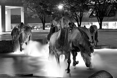 the mustangs of las colinas (bytegirl24) Tags: horses bw sculpture water fountain bronze buildings texas irving mustangs lascolinas robertglen themustangsoflascolinas