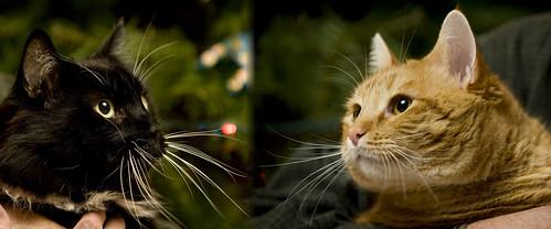 Kiki & Newman Xmas 12