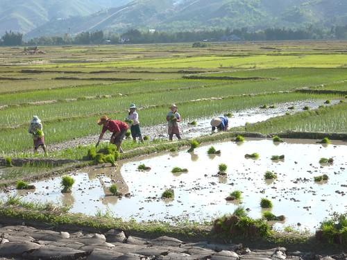 Kengtun-Village Palaung (8)