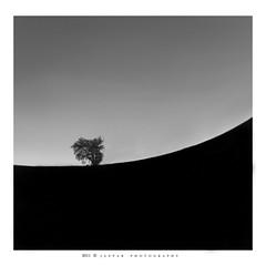 black swan (Jazpar) Tags: longexposure bw white abstract black tree cemetery field night landscapes pom swan singapore dream inspired surreal le potongpasir nilgunkara